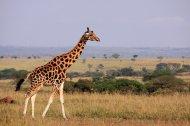 niezapomniania wycieczka - Safari