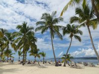 palmy na plaży